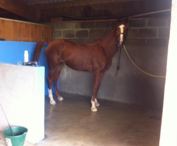 Hébergement cheval